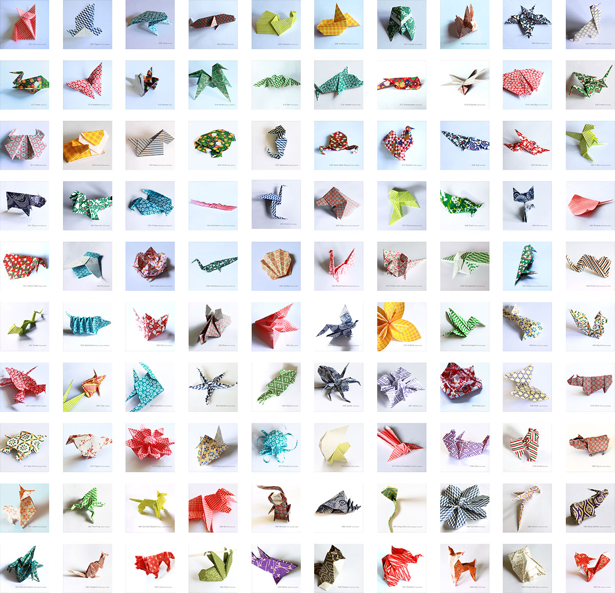 100 Days of Origami Specimens by Jessica Shiner
